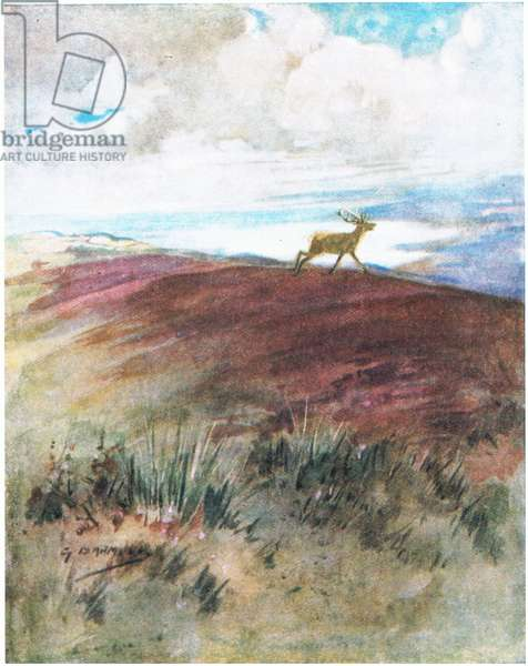 The air was close and heavy as he cantered down from the ridge (colour litho)