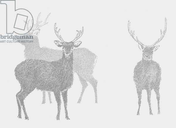 Sika Deer, 2017, (digital)