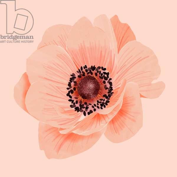 Anemone flower, 2019, digital