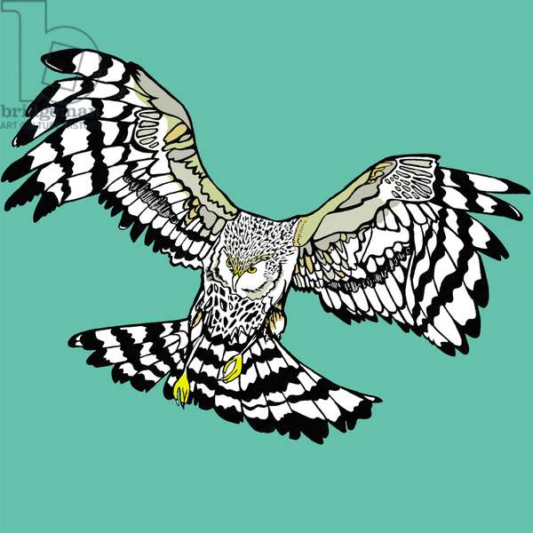 Hettie Hen Harrier, pen and ink, digitally coloured
