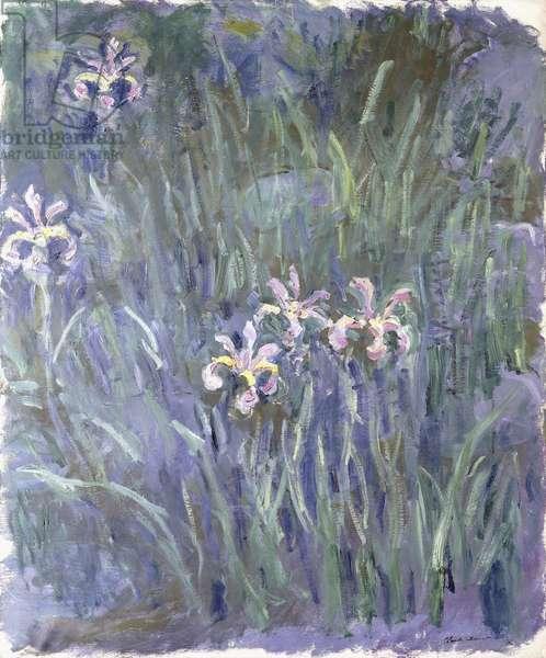Iris, c.1914-1917 (oil on canvas)
