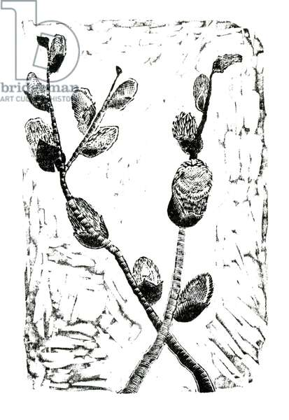 Sleeping Pussy Willow, 2014 (wood engraving on paper)
