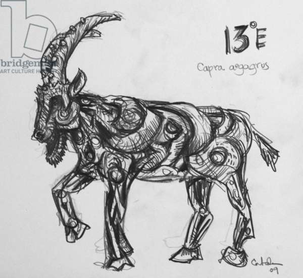 13E Wild Goat, 2009, (graphite on paper)