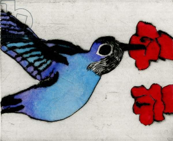 Hummingbird, 2009 (drypoint and watercolour)