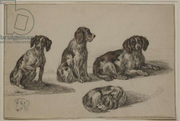 Studies of a seated and sleeping Spaniel (black & brown chalk on paper)