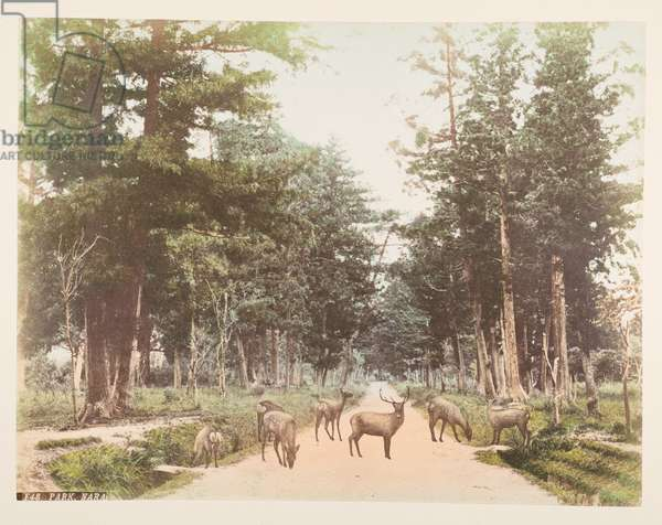 Nara Park, A Book of Coloured Photographs of views in Japan, 1895 (coloured photo)