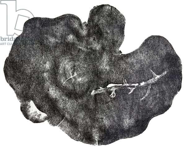 Morgondagg, 2014 (wood engraving on paper)