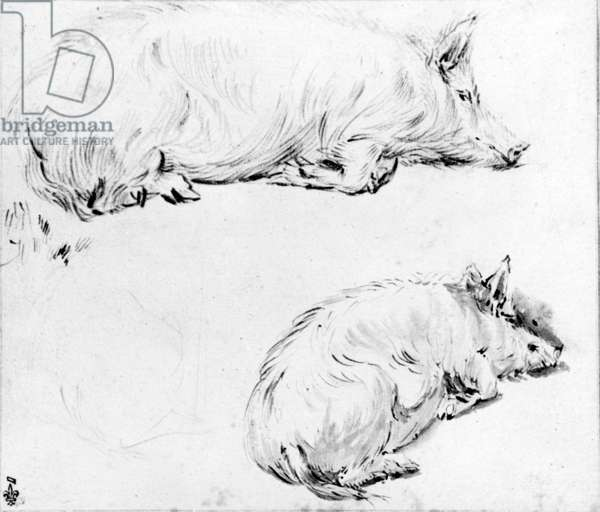 Study of two pigs (ink & black stone pencil)