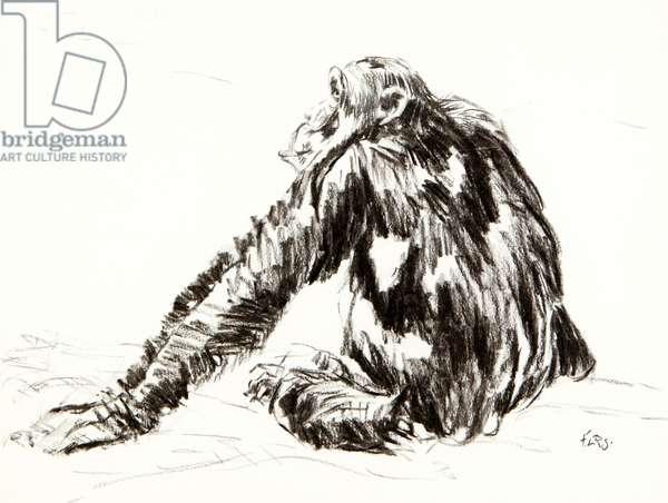 Chimpanzee, 2015 (charcoal)