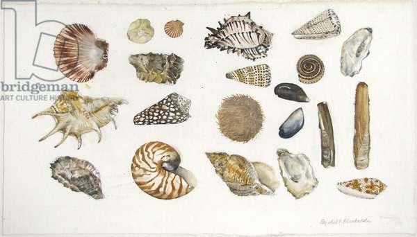 Shells (pencil & w/c on paper)