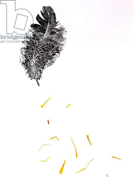 Feather {Fay-erie Dust}, 2014 (wood engraving and plant fragments on paper)