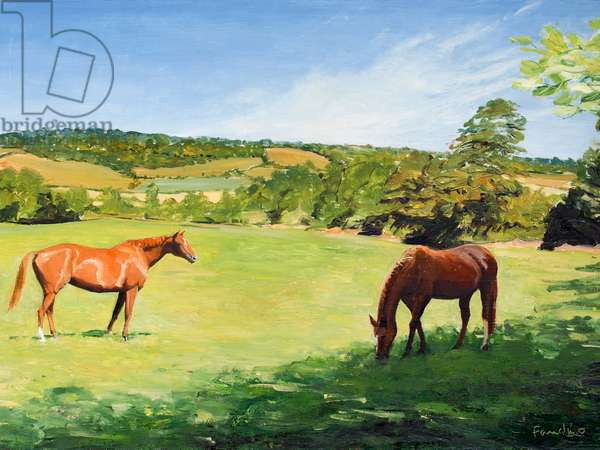 Grazing Horses near Otford, Kent