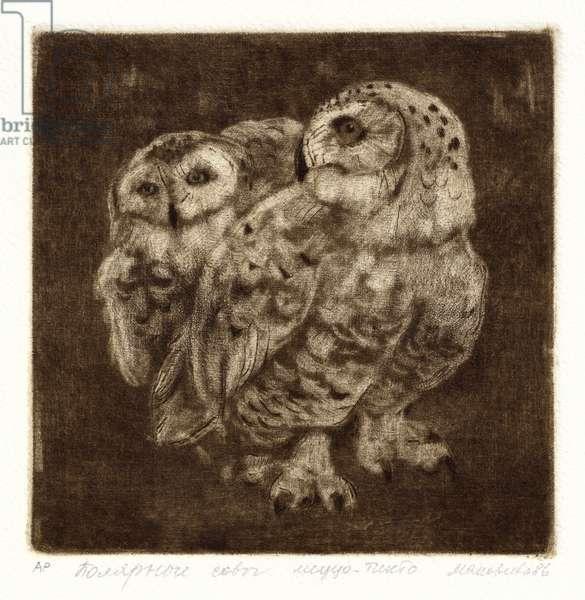Snowy Owl(Bubo scandiacus), 1986 (mezzotint)