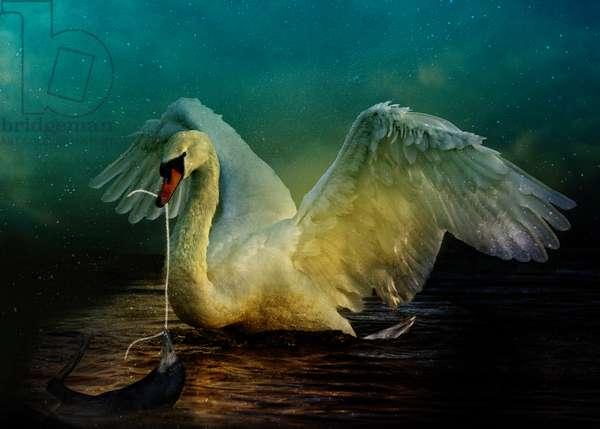 Bird Kingdom 6, 2018 (digital photo art)