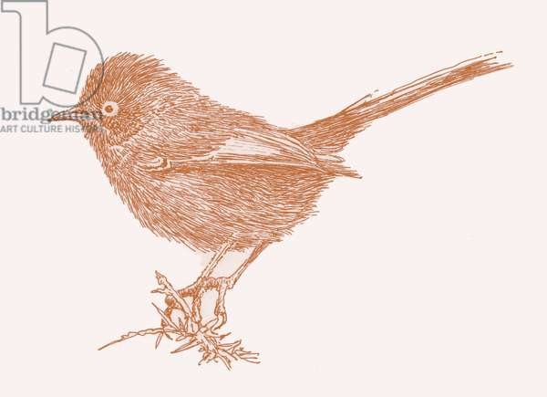 Dartford Warbler, 2017, (digital)
