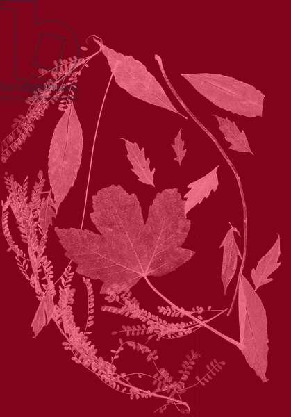 Red Foliage, 2017, (digital)