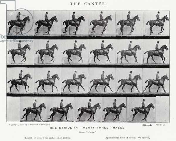 Eadweard Muybridge: The Canter (b/w photo)