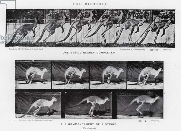 Eadweard Muybridge: The Ricochet (b/w photo)