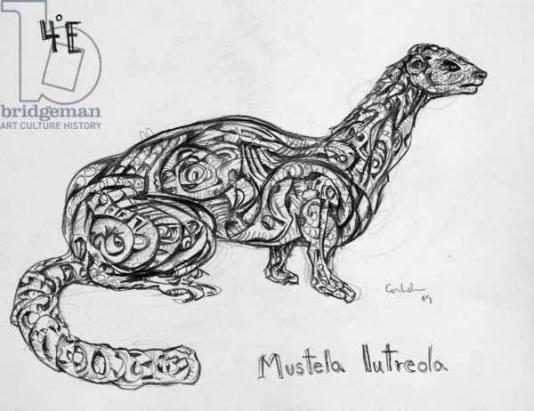 4E European Mink, 2009, (graphite on paper)