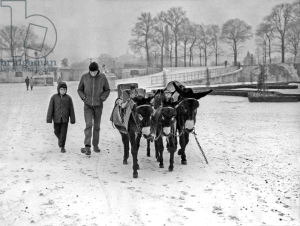 Winter in Paris, December 10, 1967 (Snow) : in Tuileries Gardens, The Donkeys (b/w photo)