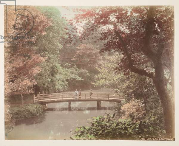 Maple trees, Autumn, from A Book of Coloured Photographs of views in Japan, 1895 (coloured photo)