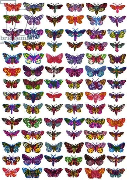Moths, 2009, (screen print)