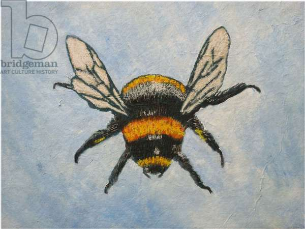Bumble bee, 2015 (pastels & watercolours)