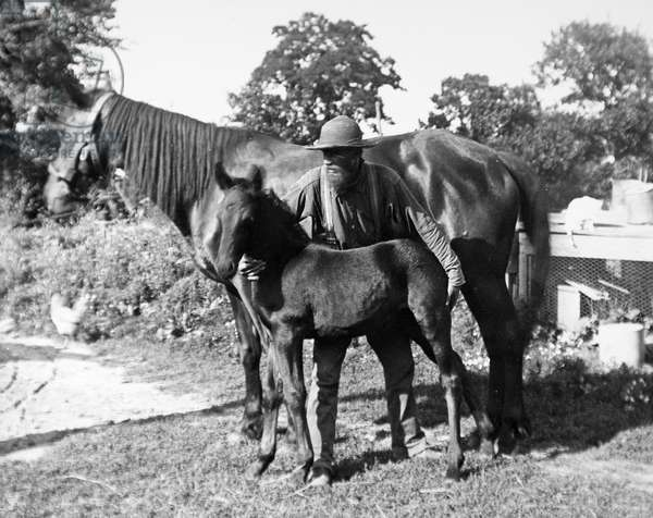 HORSE WITH FOAL Photograph, American, early 20th century.