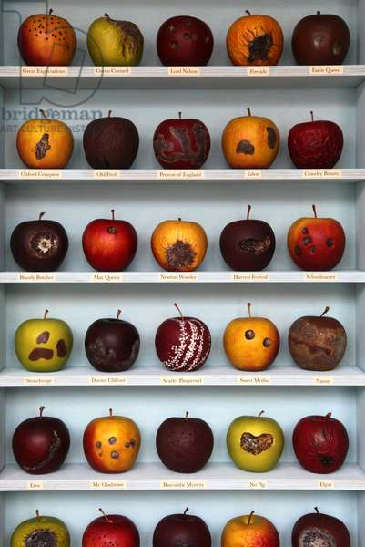 Bad Apples, 2010, (box construction)
