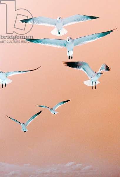 Cuban Birds on Coloured Film