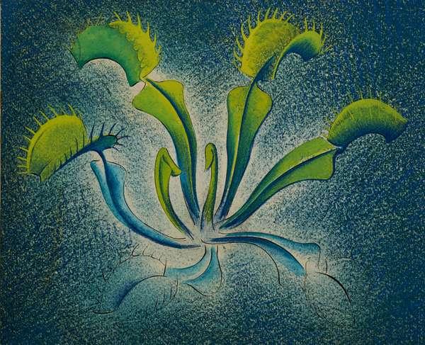 Dionaea, 1948 (w/c on paper)