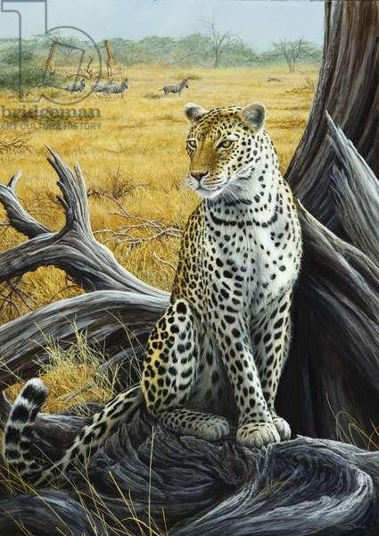 Watcher - leopard, 2013, acrylic on board