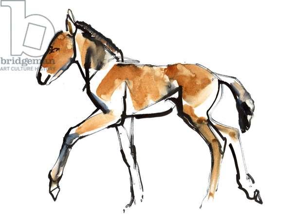 Colt (Przewalski), 2013 (sennelier Ink, watercolour & gouache)