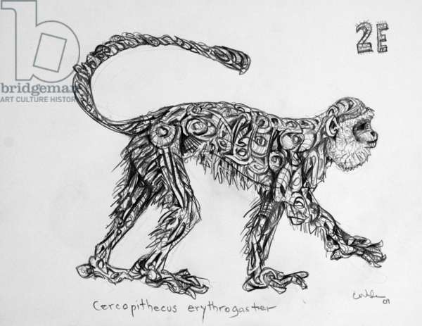 2E Red-bellied Monkey, 2009, (graphite on paper)