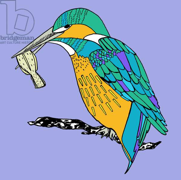 Kenny kingfisher, 2014, pen and ink, digitally coloured