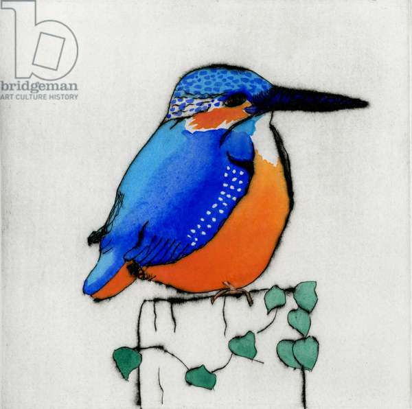 Perching Kingfisher, 2011 (drypoint and watercolour)