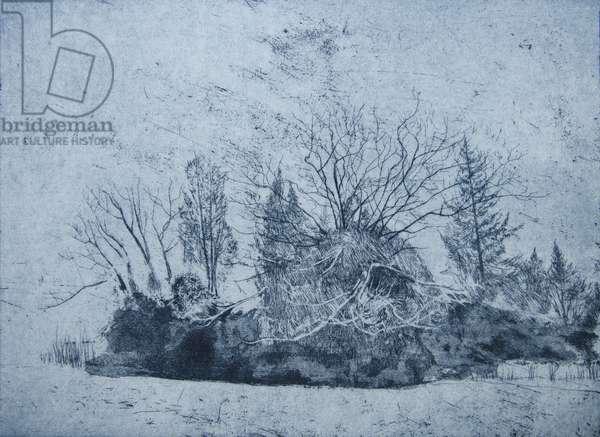 Pinetum, Cammo, 2015, (etching)