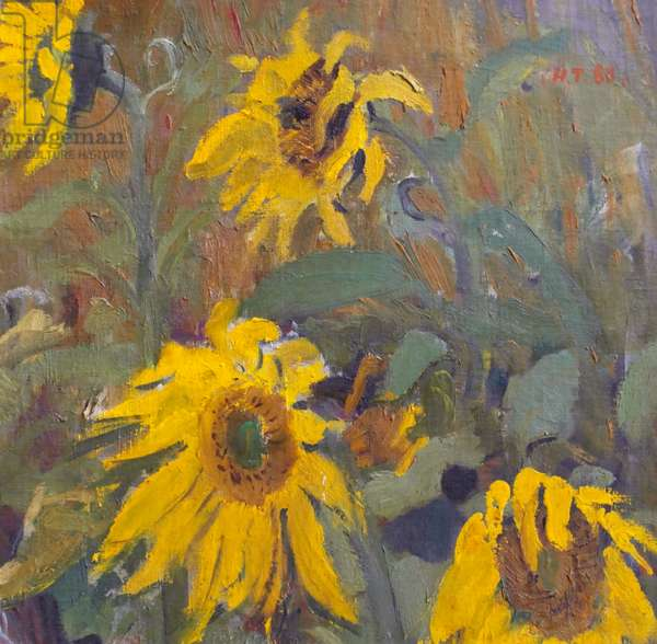 Sunflowers, 1966 (oil on canvas mounted on card)
