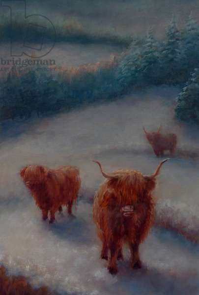 Highland Cattle, 2018, (oil on canvas)