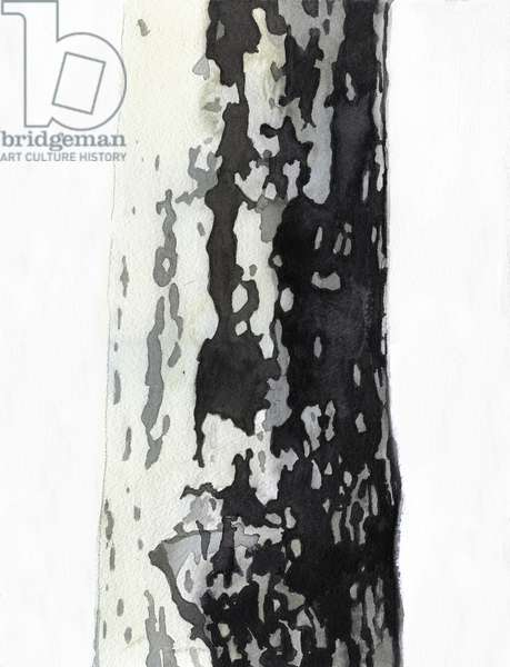 Plane Tree, 2017 (w/c & acrylic on arches paper)