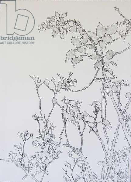Rose Garden, 2012 (etching)