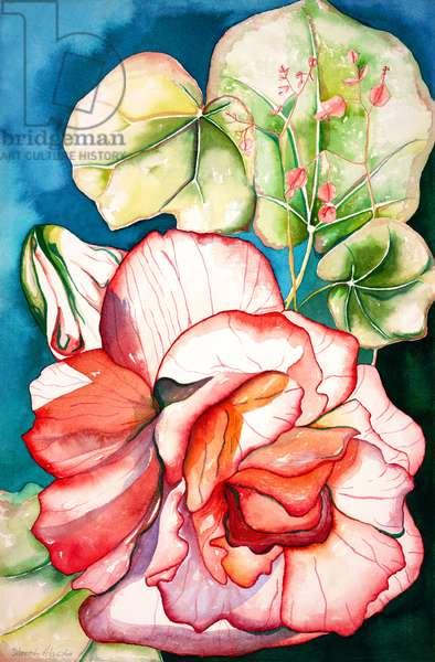 Begonia; 2006 (watercolor)