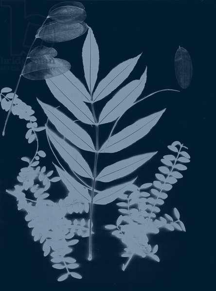 Cyan Foliage 01, 2017, (digital)