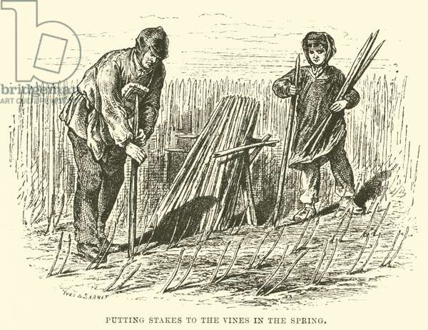 Putting Stakes to the Vines in the Spring (engraving)