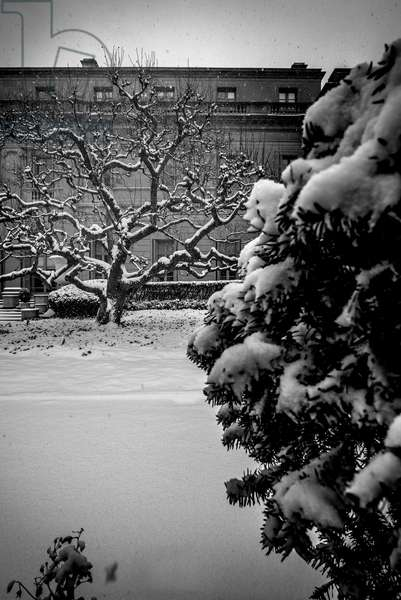 Frick Collection Winter Nº1