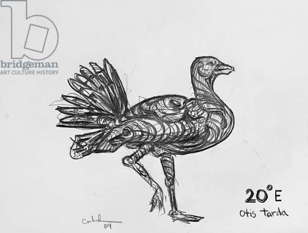 20E Great Bustard, 2009, (graphite on paper)