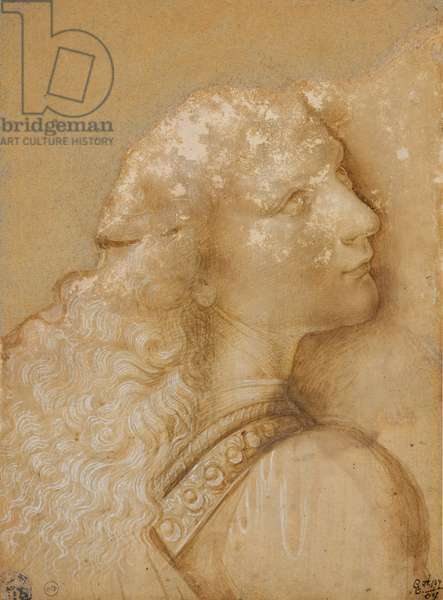 """Bust of a young man, study for the angel of the """"Baptism of Christ"""" of Verrocchio, c. 1475 (metal tip, ocher watercolour and white ink on prepared paper light ochre)"""