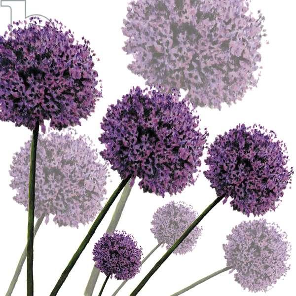Allium Fernandez, 2004 (digital)