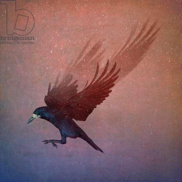 Bird Kingdom, 2018 (photo art)