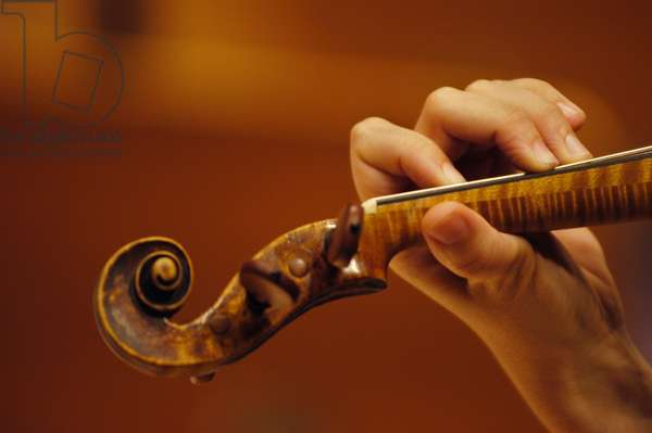 Violin scroll and  neck